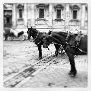 Caballos con carruaje